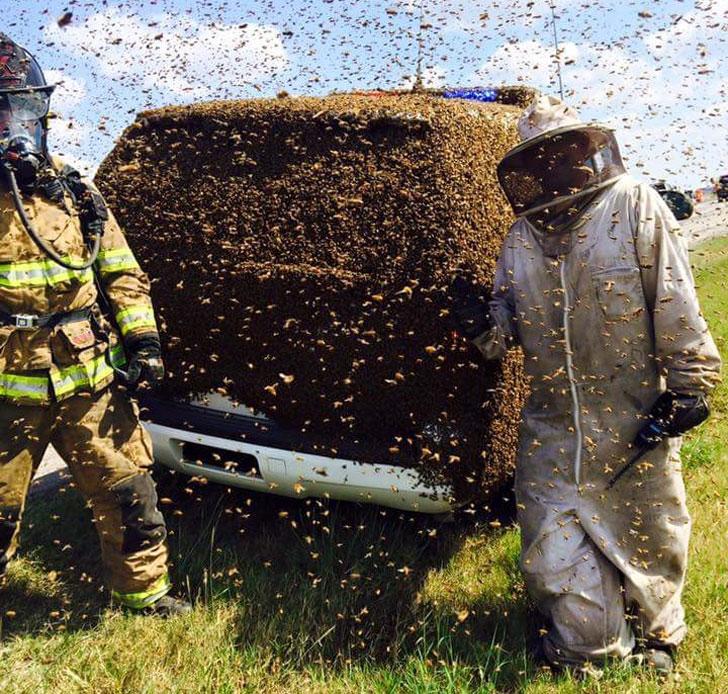 Casual, con un enjambre de abejas en el auto.