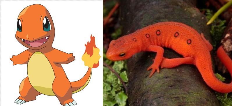 Charmander | Salamandra roja.