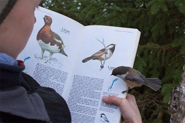 Un lindo pajarito vesu misma ilustración en un libro.