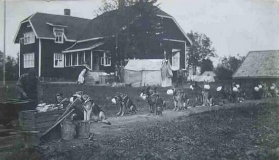 Una organizada manada de perros espera en orden su ración de comida.