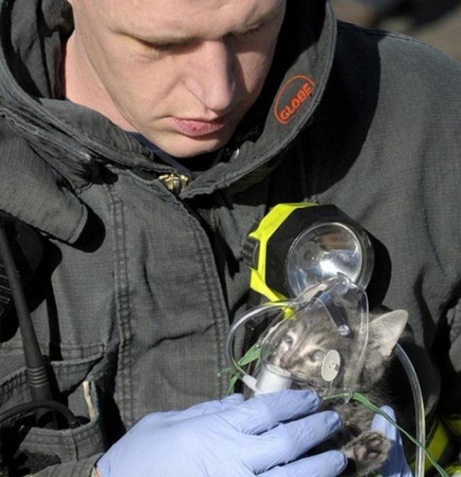 Gatito rescatado.
