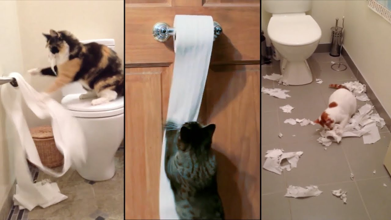 Desenrollan el papel higiénico.