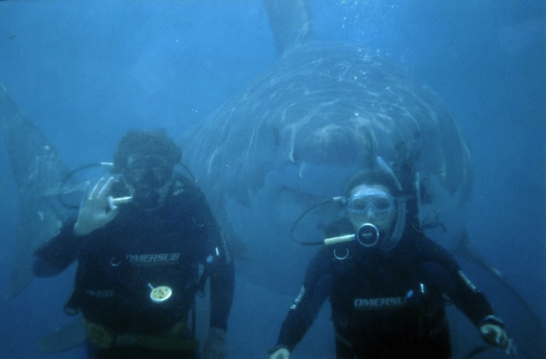 http://videisimo.net/sites/default/files/shark-week-discovery-banned-in-hollywood-08.jpg
