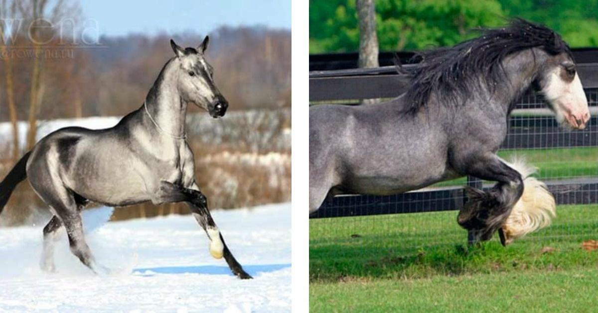 ¿Te gustan los caballos? Aquí los 10 más bellos que podrás ver en mucho tiempo