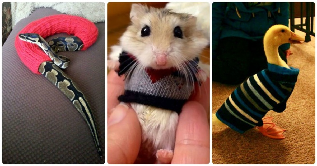 16 adorables fotografías de animales usando pequeños suéteres que te matarán con su ternura.