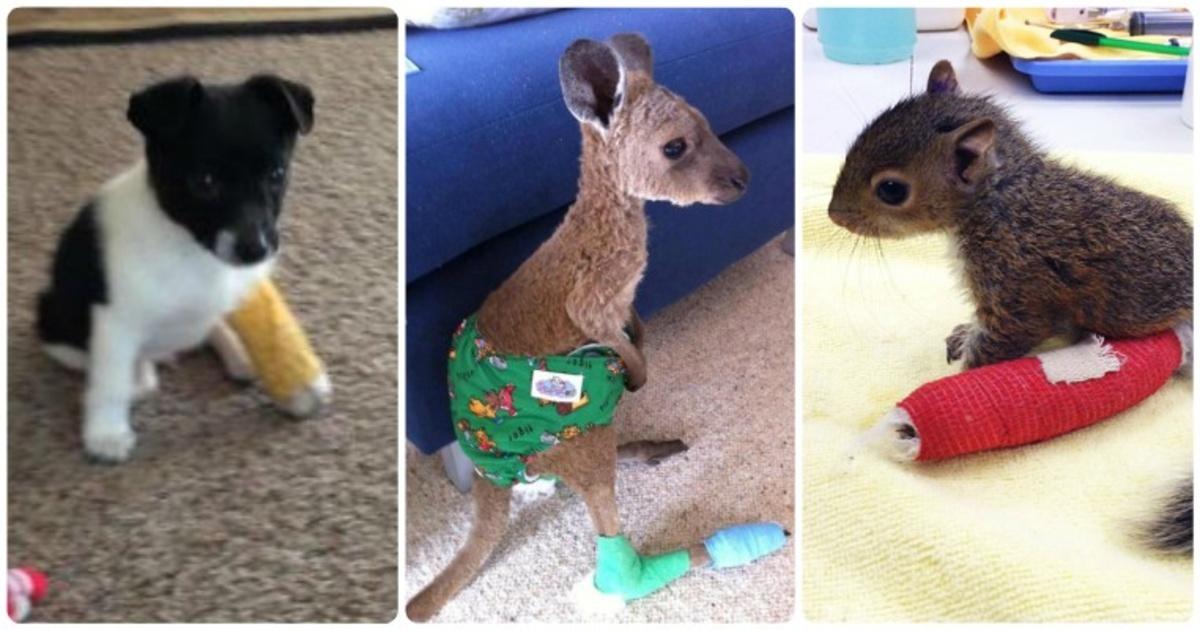 15 adorables fotografías de inocentes animalitos usando yesos diminutos que robarán tu corazón. Los amarás a todos.