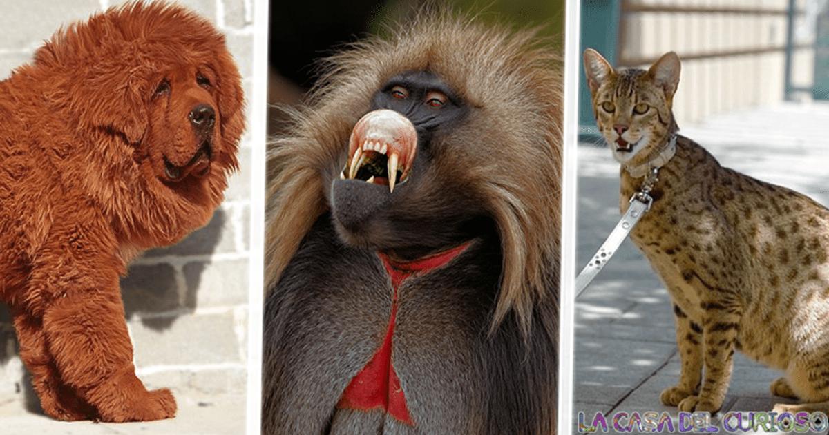 Los animales mas caros y exóticos del mundo