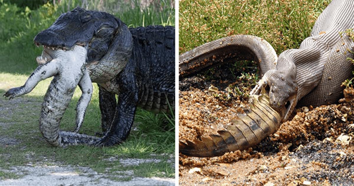 16 fotos que prueban que Australia es el país más peligroso del mundo