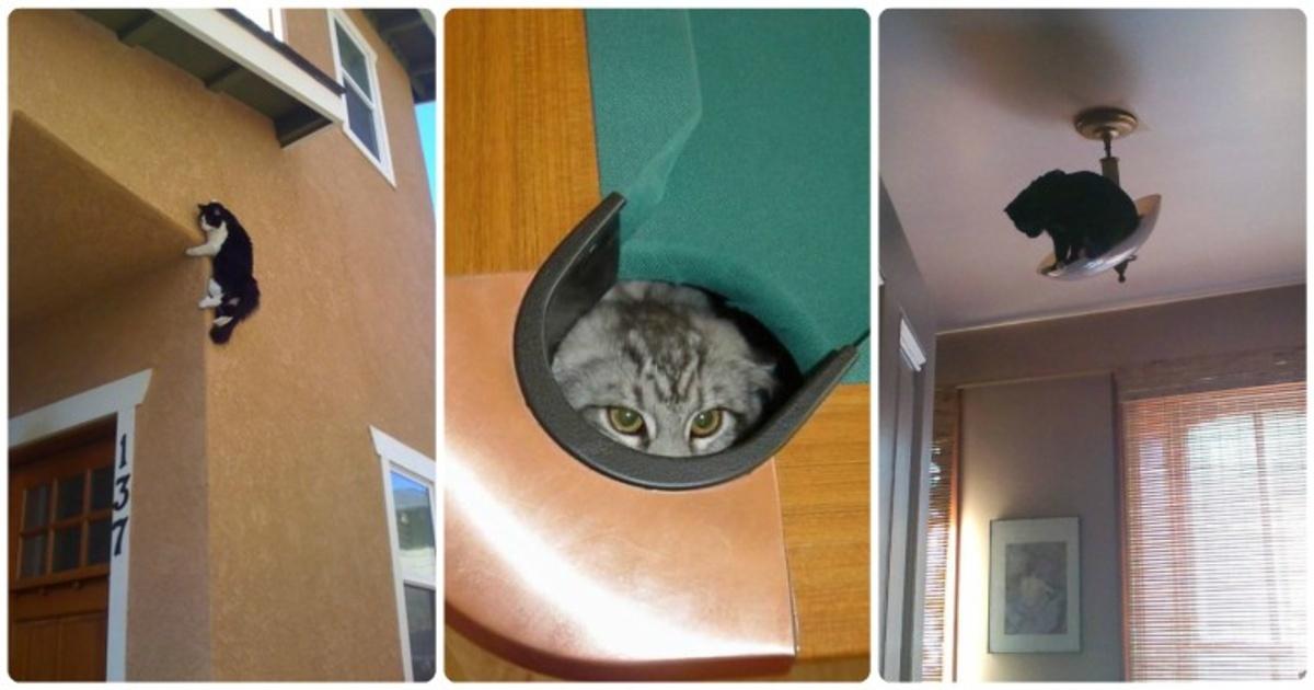17 curiosos gatitos que se volvieron en maestros del arte ninja