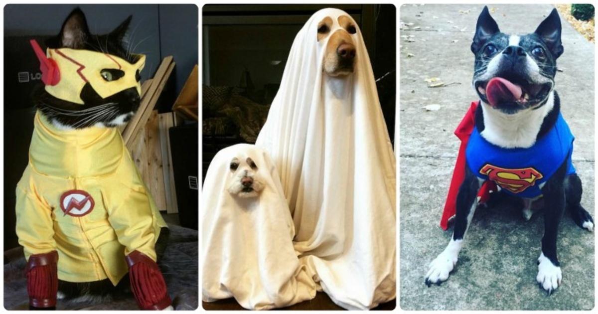 18 mascotas disfrazadas que fueron la sensación este Halloween. ¡Amé el de Harry Potter!