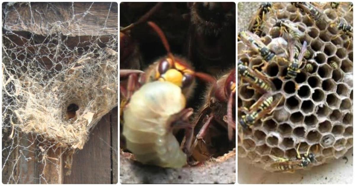 Terroríficas fotos de nidos de insectos que te harán respetar a estos enigmáticos animales.