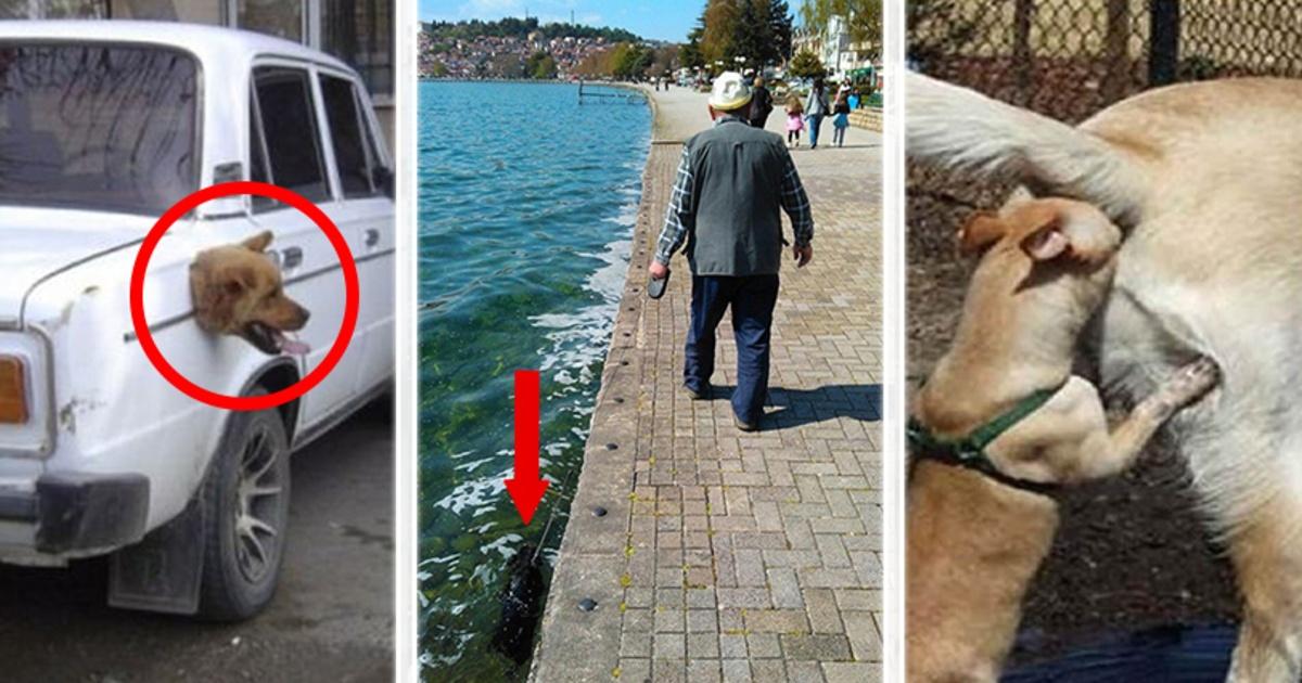 13 Graciosas fotos de perros demasiado WTF