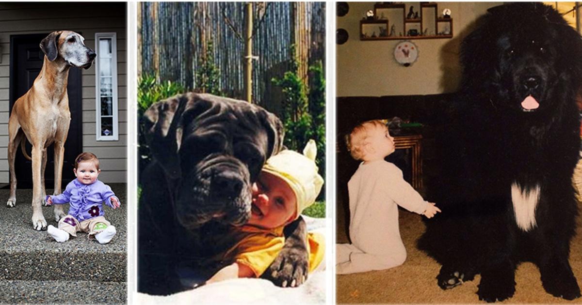 20 enormes perros y sus pequeños dueños, ¡Son completamente adorables!