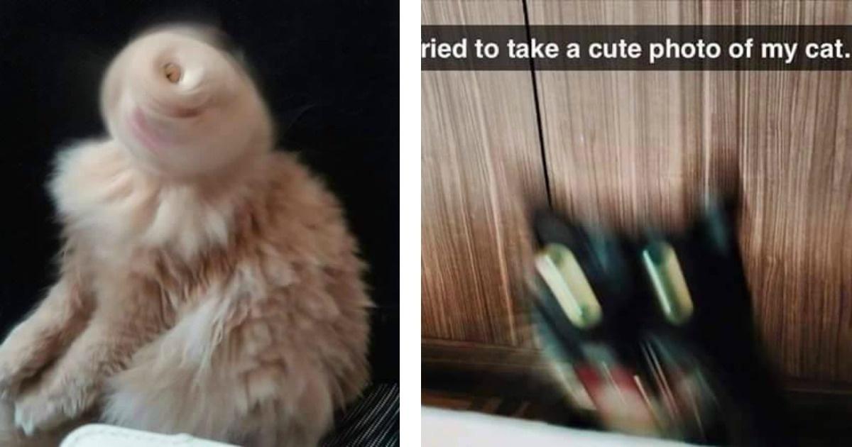 Como cuando quieres tomar una foto a tu gato y algo raro pasa :O!