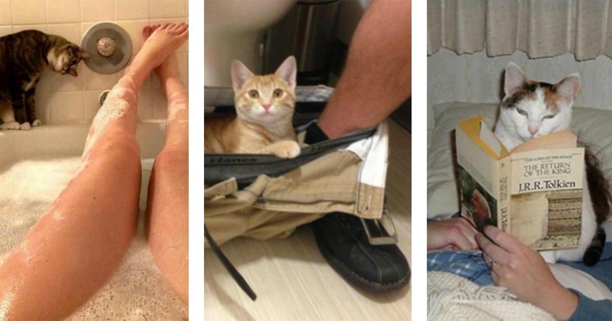 Mira a los gatos más entrometidos del mundo
