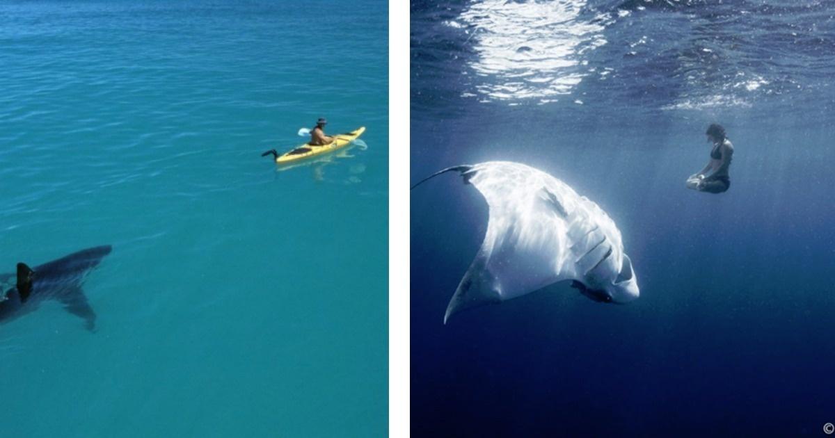 10 Fotos que harán que le tengas terror a lo que hay bajo el agua