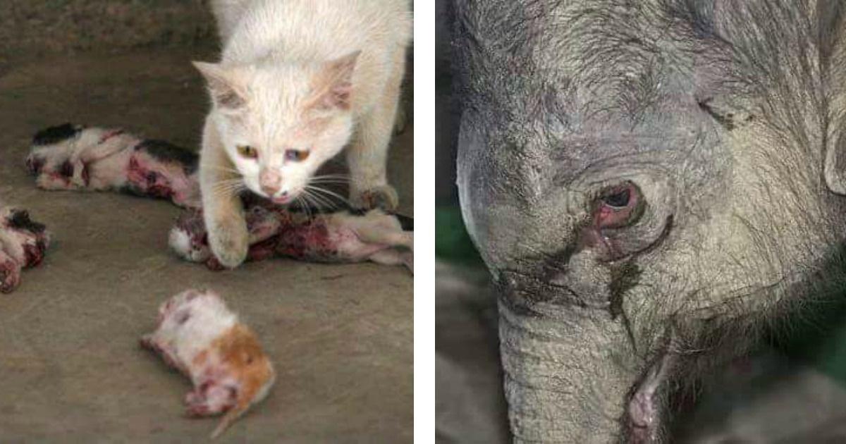 12 imágenes muy fuertes que demuestran los sentimientos de los animales...
