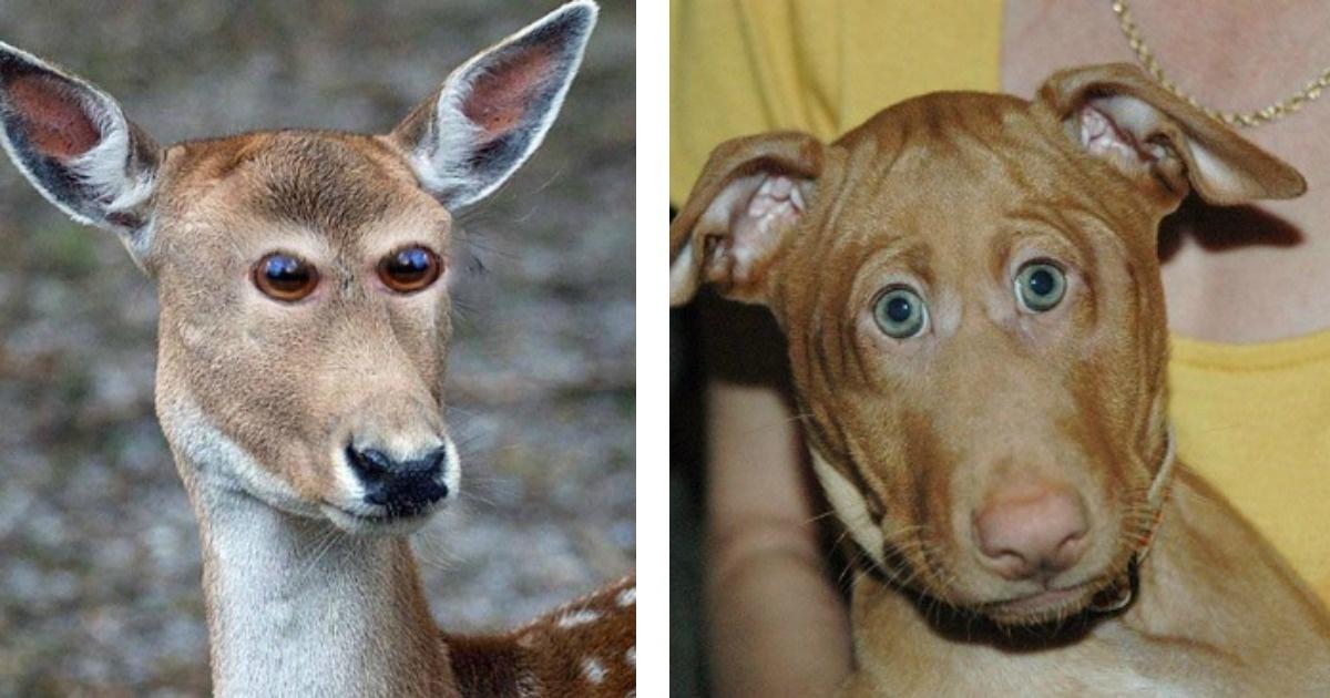 Cómo se verían algunos animales si tuvieran los ojos al frente