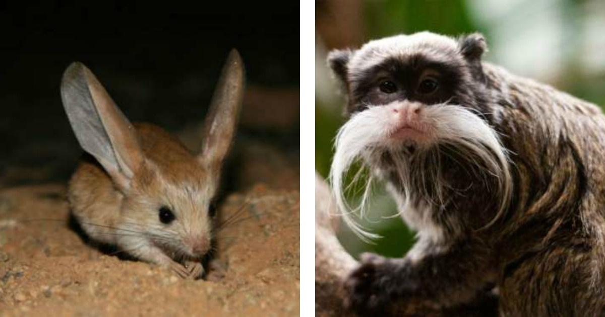 7 animales que seguramente no conocías...