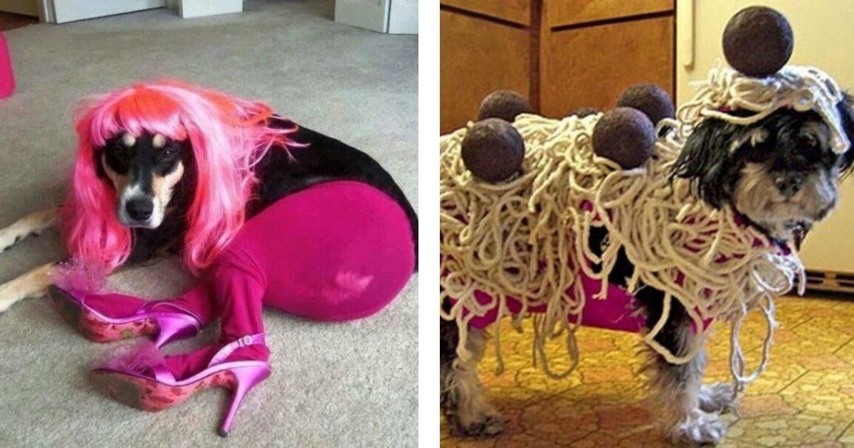 13 Graciosas fotos de mascotas vestidas muy extrañas