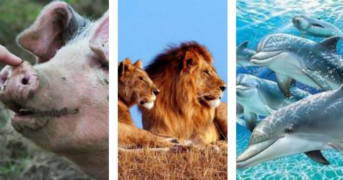 11 Animales que deberían usar capa de superhéroe.
