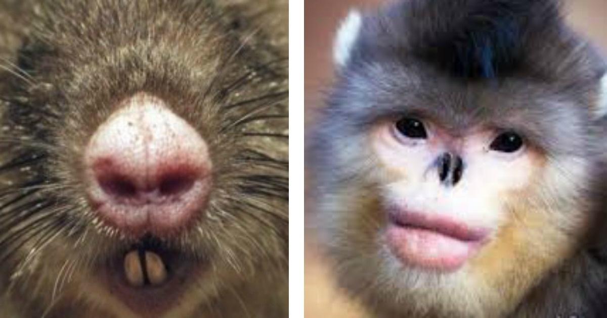 ¡5 Animales extraños que fueron descubiertos hace poco tiempo!