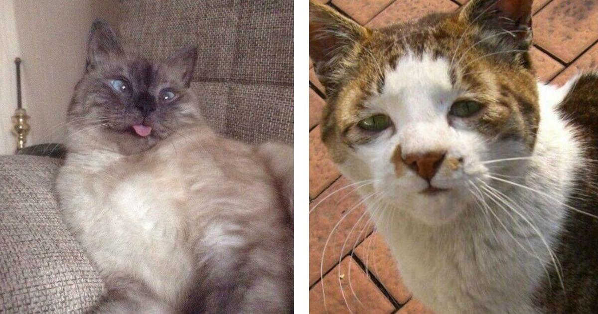 10 Divertidas fotos que demuestran que hay gatos nada fotogénicos