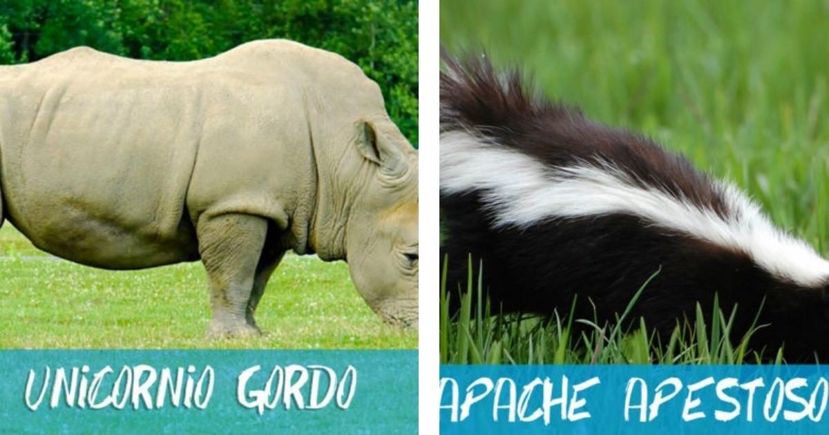 11 Animales que deberían tener un nombre más adecuado y divertido