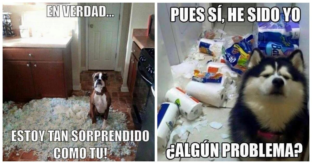 portada_142 16 memes de perros que se hicieron famosos en internet gracias a