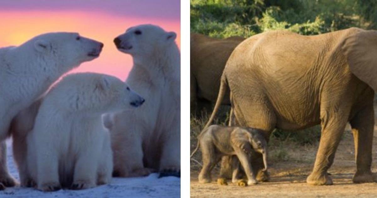 Las #10 mamás animales más tiernas del mundo. La maternidad es lo más bello.