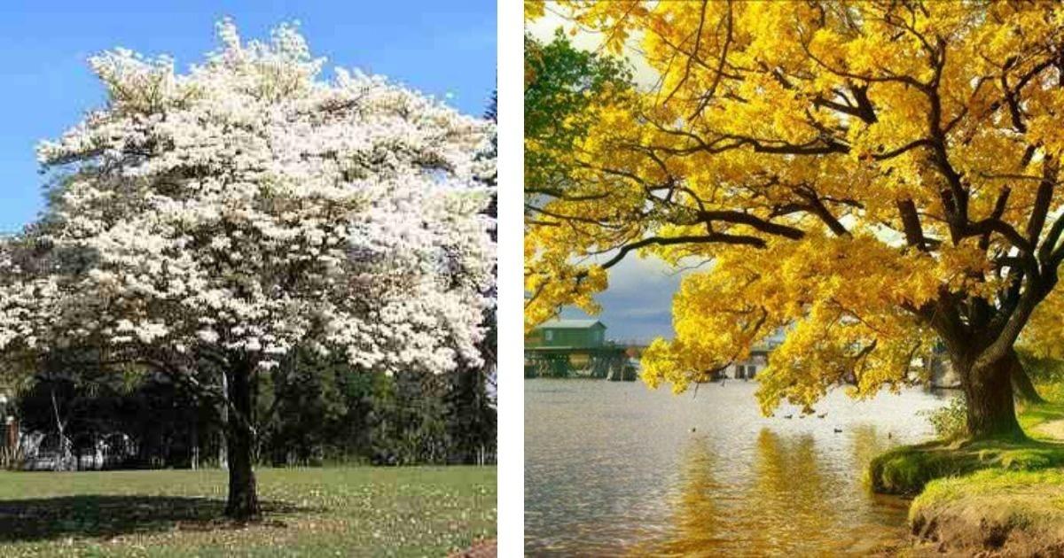 9 árboles espectaculares en el mundo