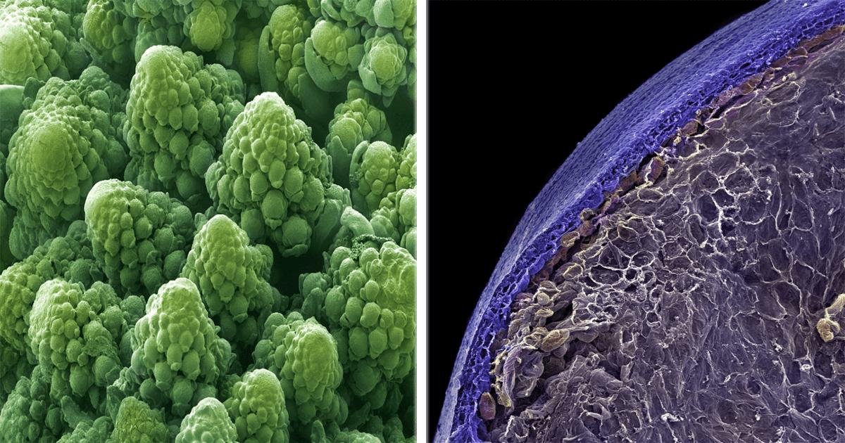 13 Increíbles imágenes de alimentos bajo el microscopio.