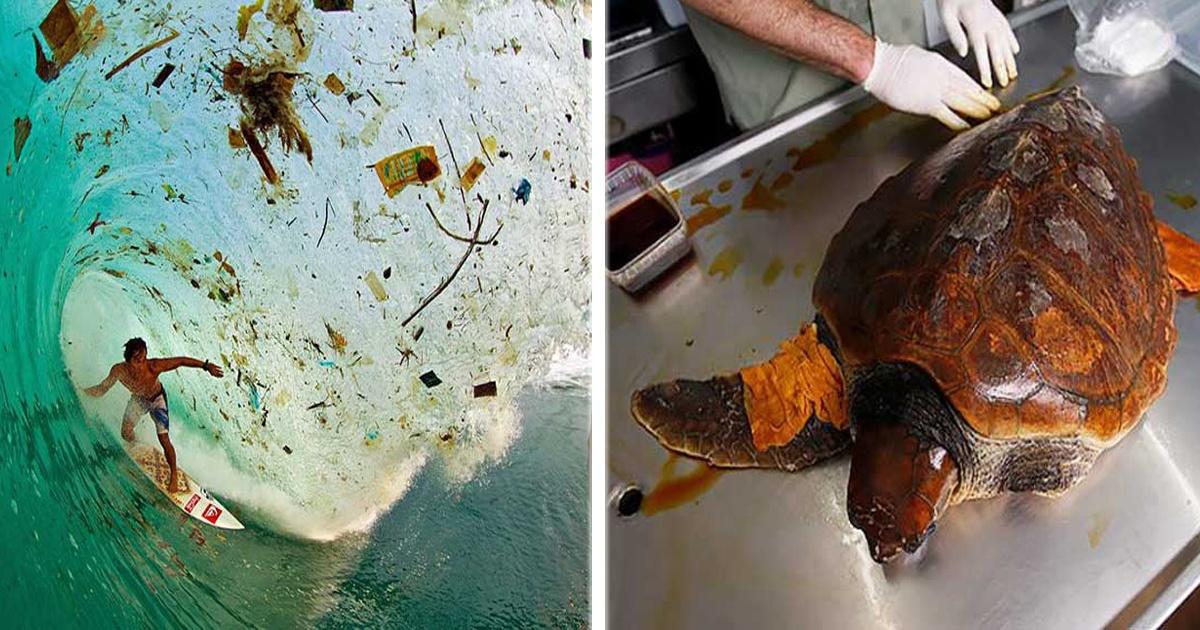 14 Imágenes que te harán reflexionar sobre el daño que le hacemos al medio ambiente.