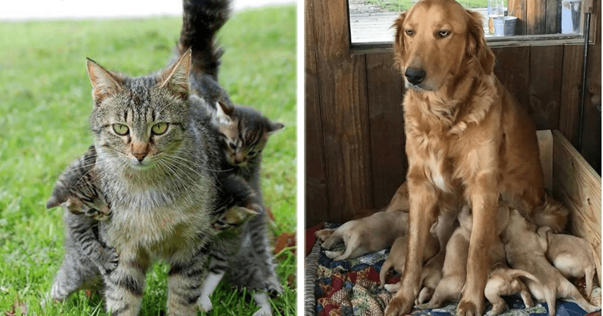 12 Mascotas a las que la maternidad les pegó duro.