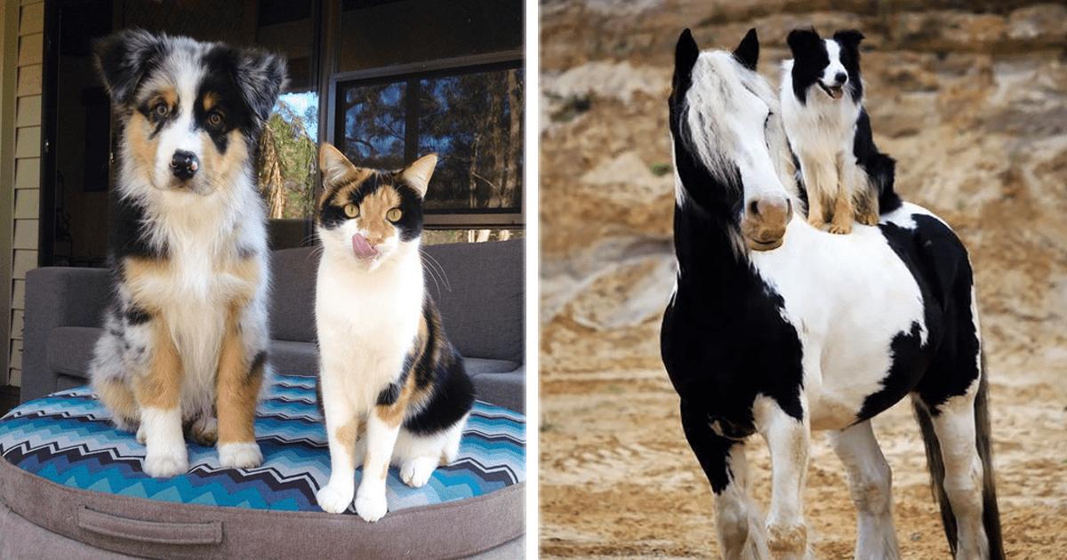 12 Animales que son como hermanos gemelos pero de diferente especie.