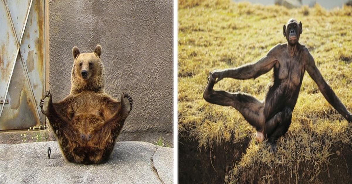 18 Imágenes de animales en graciosas posiciones de yoga. ¡El #16 es el más tierno!
