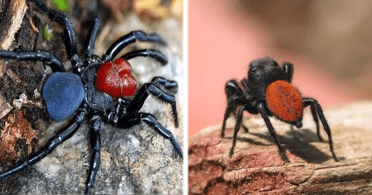 Las 10 arañas más venenosas, la  #10 es mexicana y vive muy cerca de ti.