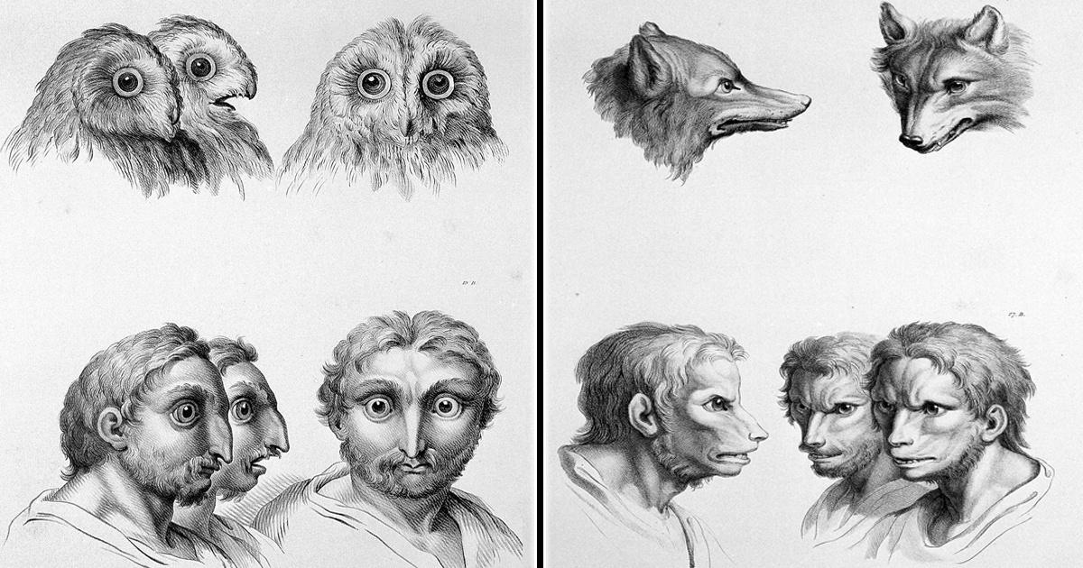 ¿Qué pasaría si los humanos hubiéramos evolucionado de otros animales?
