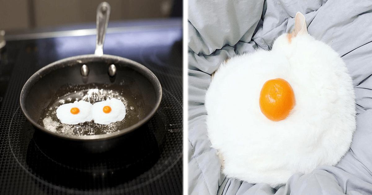 Este gato que parecía un huevo fue la víctima de una batalla de Photoshop.