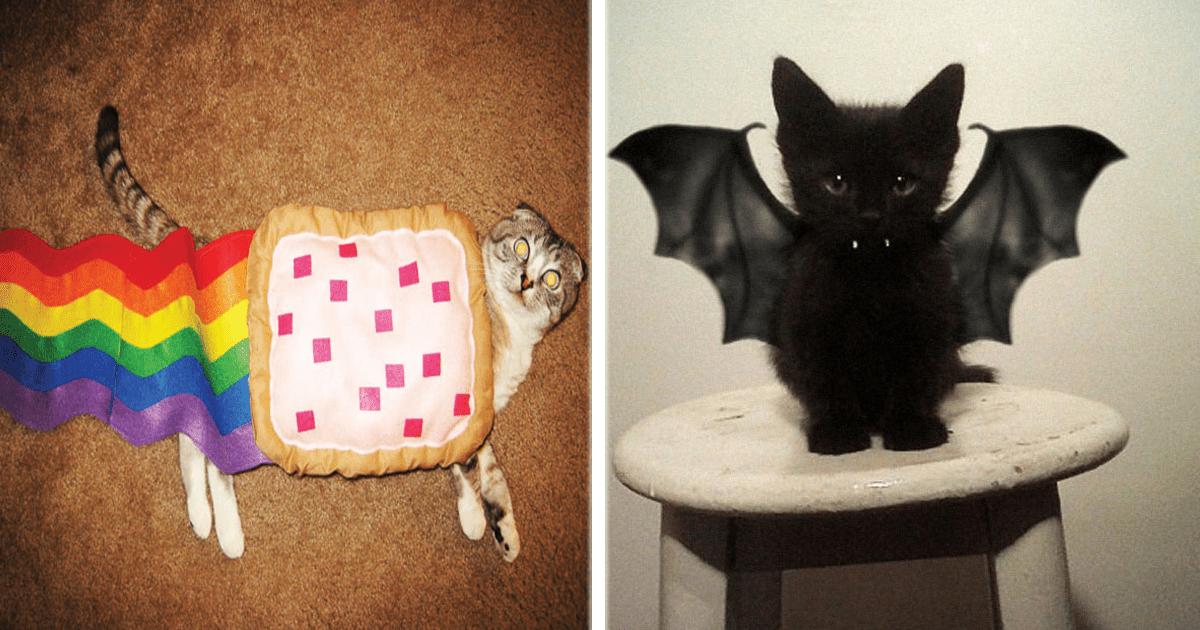 ¡10 Increíbles disfraces de Halloween para tu gato!