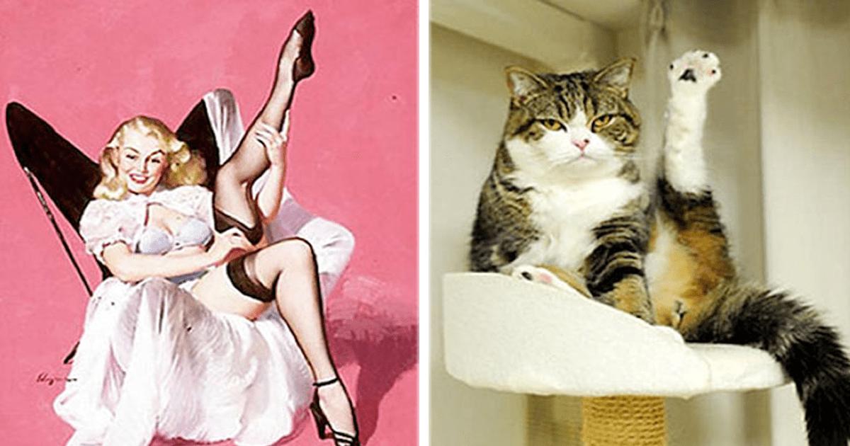 11 Lindos gatitos le copian la pose a las lindas chicas pin-up.