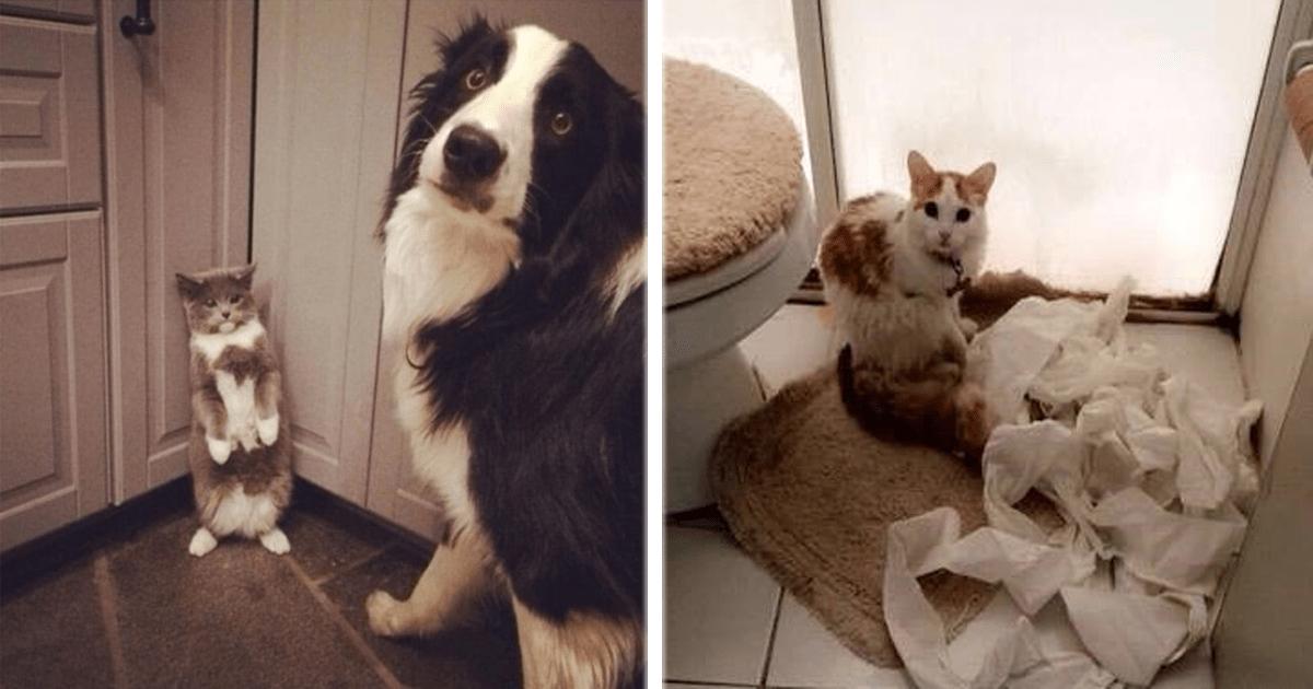 13 Mascotas que fueron sorprendidas con las patas en la masa.