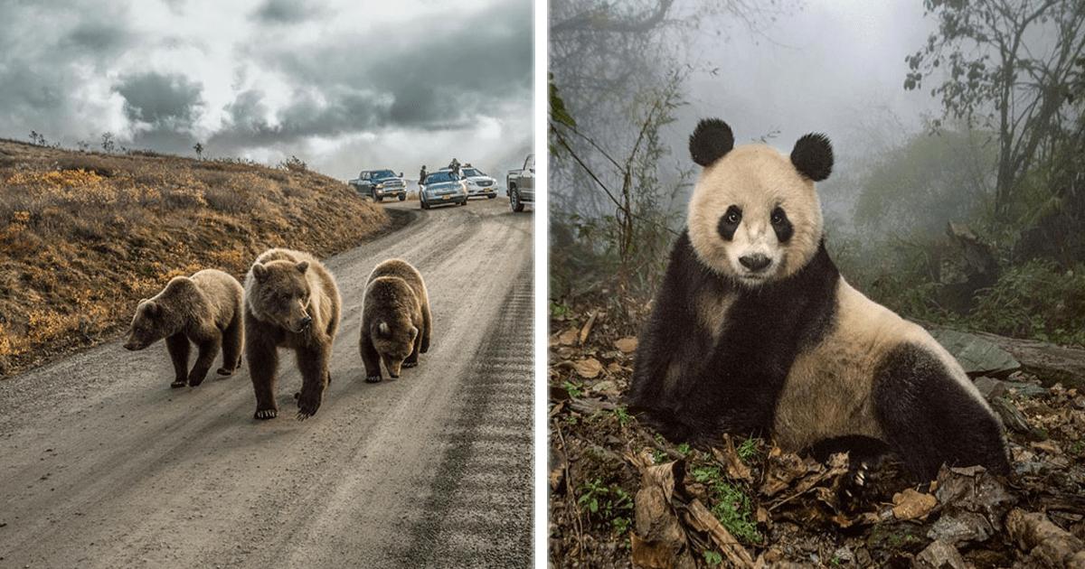 12 De las mejores fotografías elegidas por National Geographic.