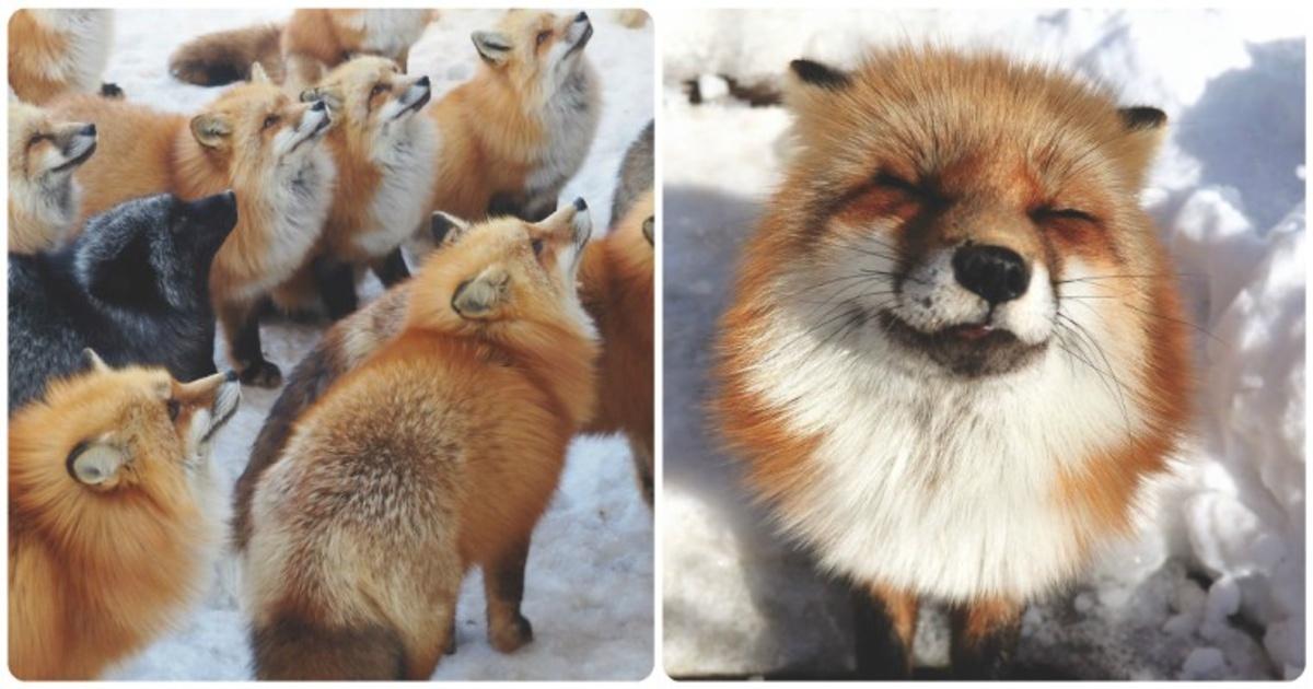 Las fotos de esta chica mexicana nos muestran lo mágico que es el pueblo de zorros de Japón.